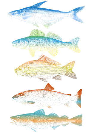 set of colorful fishes Stock Vector - 9791265