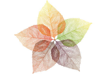 leaf line: colorful autumn leaves, vector