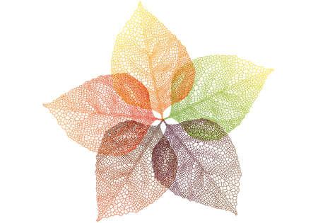 silueta hoja: coloridas hojas de oto�o, vector