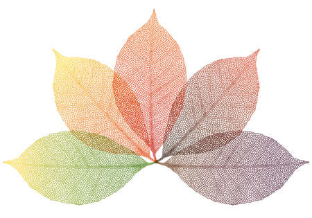 colorful autumn leaves Ilustrace