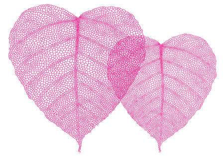 venation: heart shaped red skeleton leaves, vector background illustration