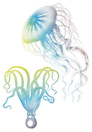 oceanography: Meduse Colorato e polipo, illustrazione vettoriale