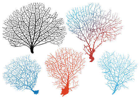 Caribbean sea: detailed black sea fan corals, vector set Illustration