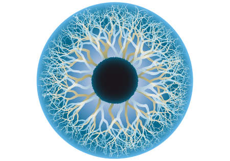 venation: blue eye, iride e la pupilla illustrazione umano Vettoriali