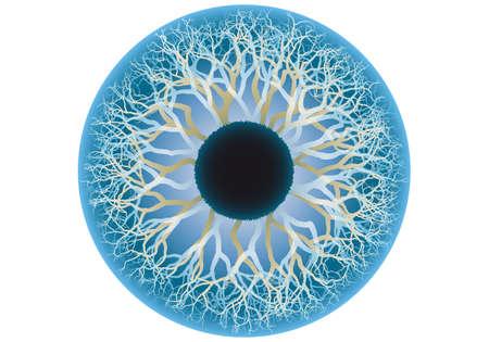 human skin texture: blue human eye, iris and pupil illustration