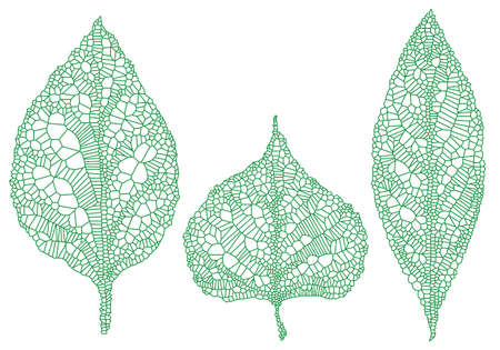 reticular: green leaves silhouette with delicate texture, vector illustration