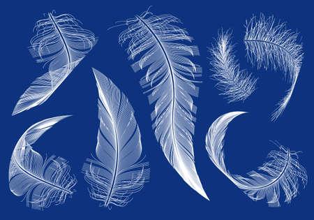 feather white: piume volanti curvi, insieme di elementi di disegno vettoriale Vettoriali