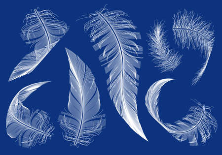 pajaro dibujo: plumas de vuelo curvos, conjunto de elementos de diseño vectorial