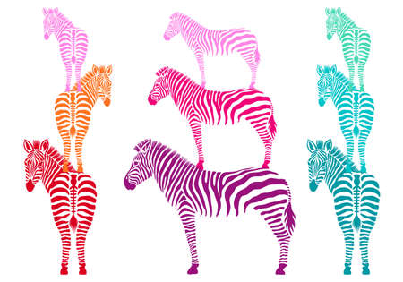 colorful zebras standing, side and back view, vector illustration Illustration