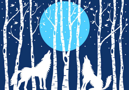 fur trees: Howling wolf with blue moon and white birch trees, vector illustration