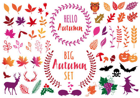Autumn leaves and flowers for Halloween concept