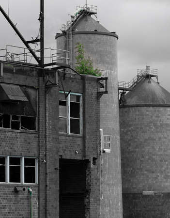 Bellingham, WA / USA - June 28, 2019: Illustrative editorial image the abandoned Georgia Pacific tissue mill, black and white with a bright green tree growing out of the ruins