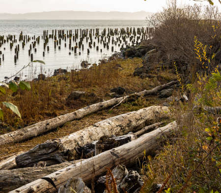 View from Knappton Point, where today all that remains are old pilings and a stone monument on the Columbia riverbank west of the old town location