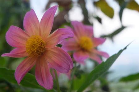 beautyful: Beautyful pink flowers