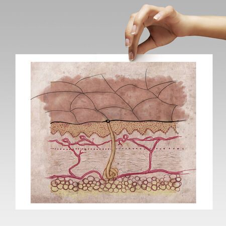 skin structure: woman hand with a paint of a skin structure