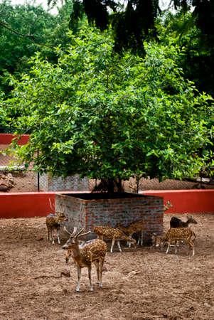 zoological: Nandankanan Zoological Park: Deer breeding centre at Nandankanan zoological park.