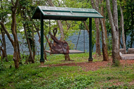 zoological: Nandankanan Zoological Park: A chimpanzee is enjoying on a hammock at Nandankanan zoological park.