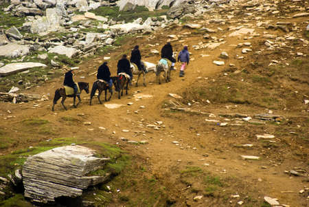 A group of tourists on pony climbing towards the Rothang pick to enjoy the beautiful mountain and snows capes