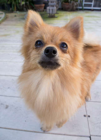 canny: brown furry dog