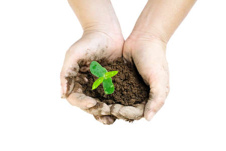 plant growing with soil among woman hands on white background