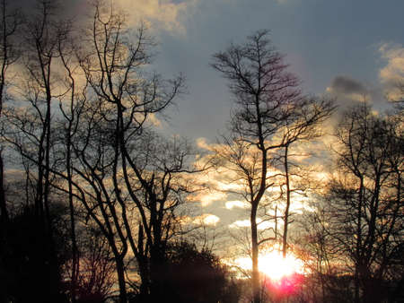 Sunset Trees 写真素材
