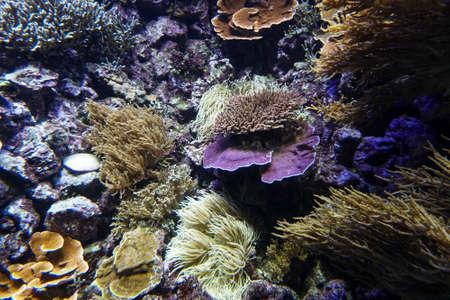 Coral reef aquarium fish anemones close up sea ocean water