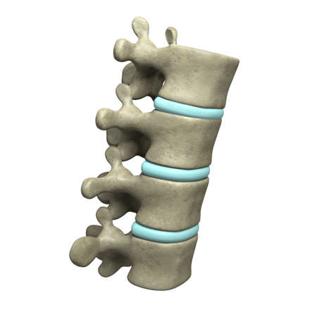 Very high resolution 3d rendering of four human vertebae.