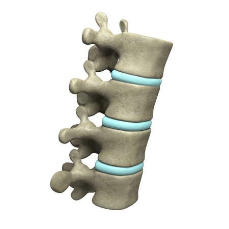 Very high resolution 3d rendering of four human vertebae.