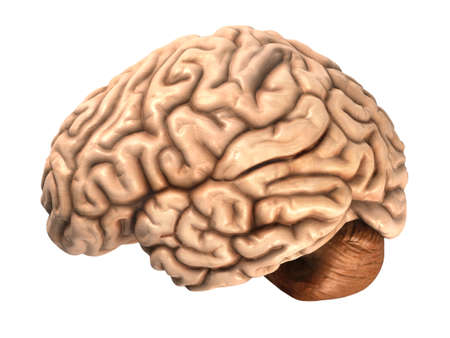 Very high resolution 3d rendering of an human brain
