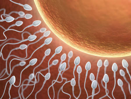 sperm cell: Very high resolution 3d rendering representing fecundation Stock Photo