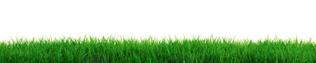 Very high resolution illustration of fresh grass over white