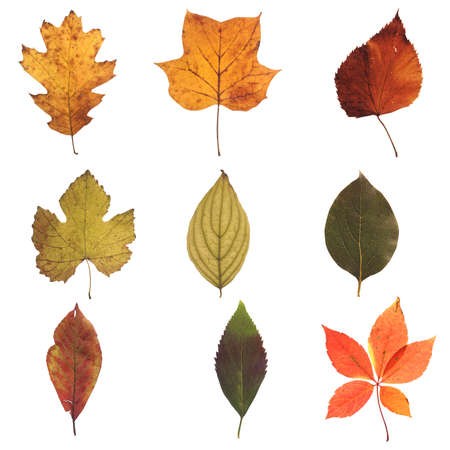 01: Autumn Leaves Collection 01 Stock Photo