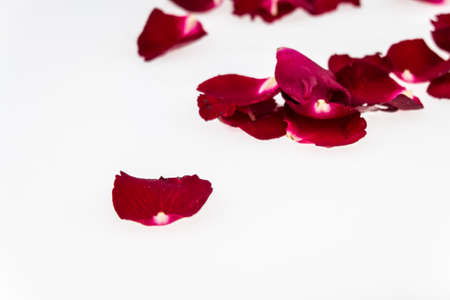 scattered in heart shaped: Red rose on white background