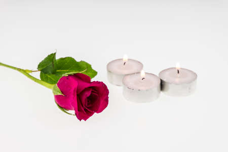 tea light: Pink rose with Tea light  isolated on white