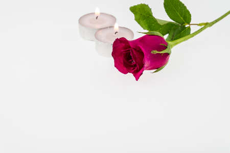 Pink rose with Tea light  isolated on white