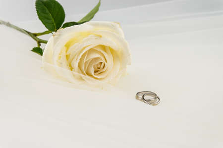 Wedding ring and White rose on white veil