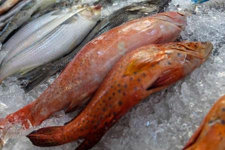 fish on ice: Fresh fish on ice
