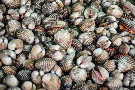 beachcombing: Cockles at the market ,Thailand Stock Photo