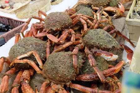 cangrejo: Cangrejos araña a la venta en el mercado provincial francesa