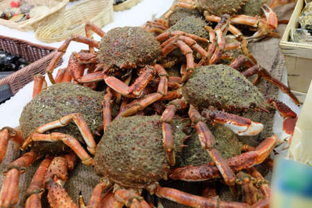 crab: Spider crabs for sale at French provincial market