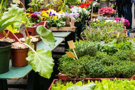 sidewalk sale: various plant in flower shop in summer Stock Photo