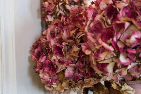 dark pastel green: Dry pink hydrangea in the room