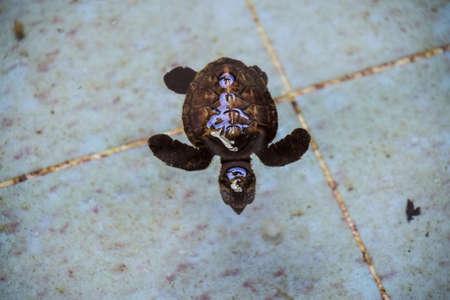 hatchery: Turtle in Fish hatchery and nursery.