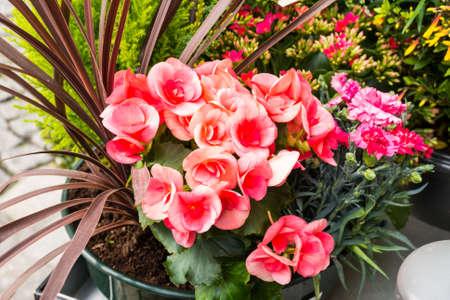 sidewalk sale: various plant in flower shop