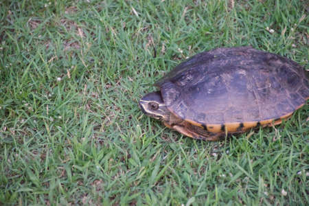 protected plant: Turtle on the grass.