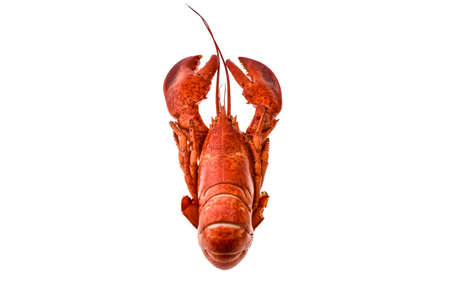 pincers: Boiled lobster on a white background.