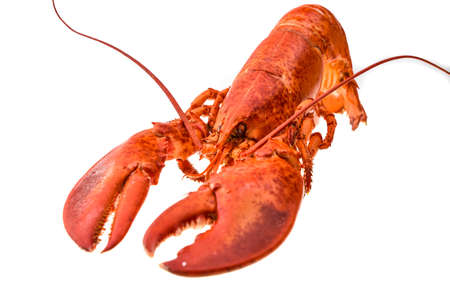 Boiled lobster on a white background.