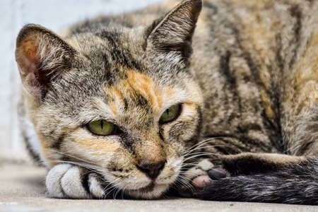 Lazy street cat sleeping on sidewalk.