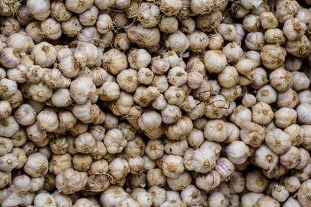 lot of fresh garlic as background.