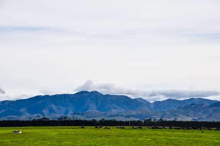 countryside with mountain view  of South island, New Zealand.